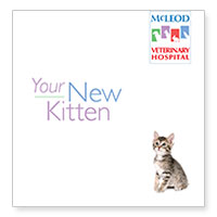 Download McLeod Vet Clinic's information on getting a new kitten